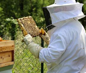 Beekeeper neu bei Tech Data Schweiz